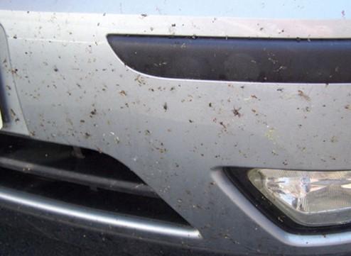 汽车漆面出现斑点